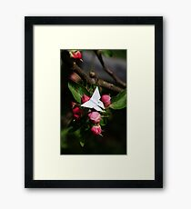 Pink Butterfly - Origami Butterfly Framed Print