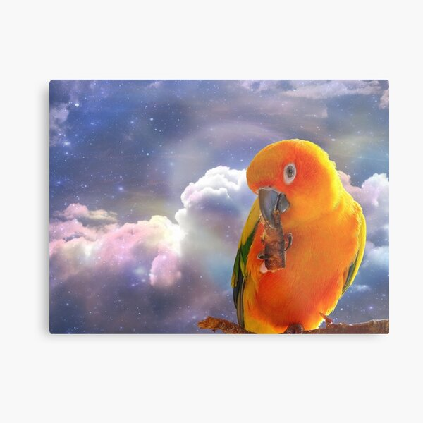 I'm Your Sunshine On A Cloudy Day...-Sun Conure - NZ Metal Print