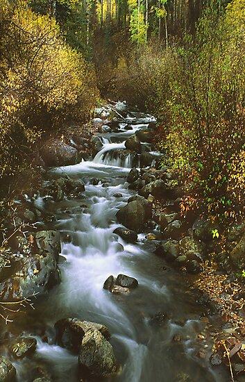 Brush Creek by Steve  Taylor