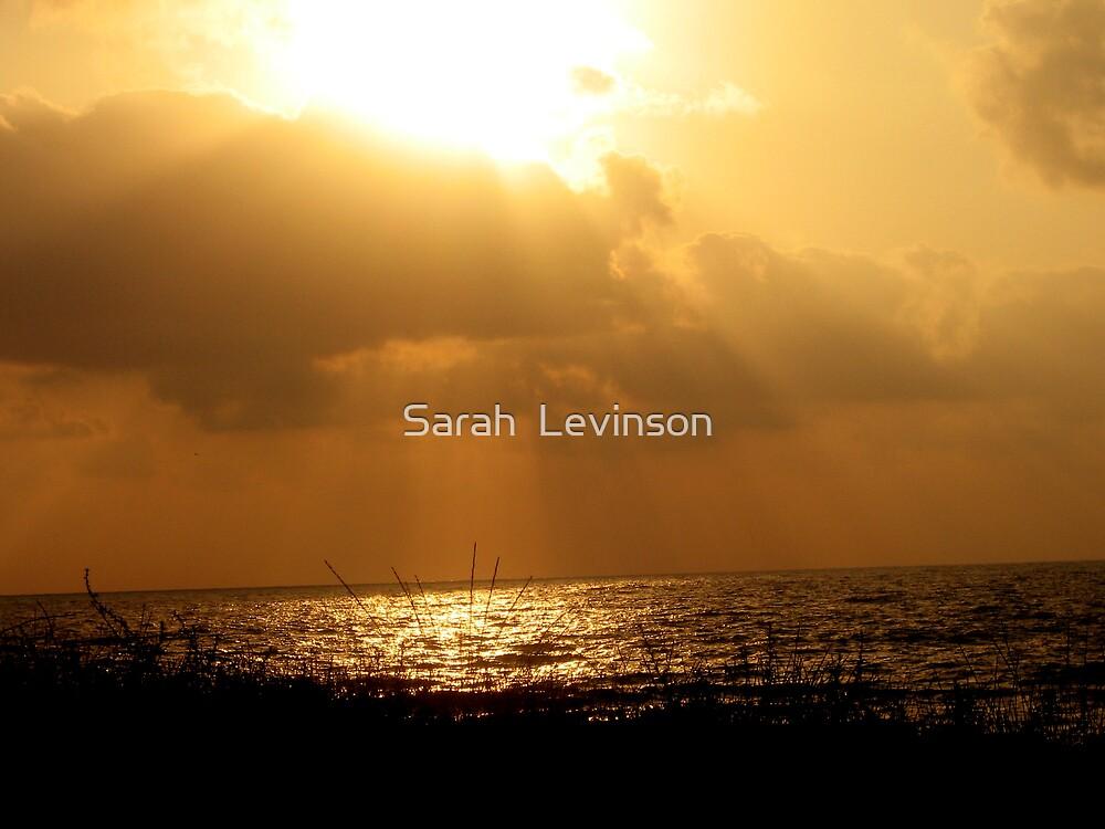 Golden sunrays by Sarah  Levinson