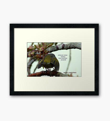 Spread your wings this festive season! - Silvereye Greeting card Framed Print
