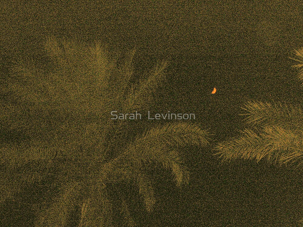 The new moon and palm trees by Sarah  Levinson