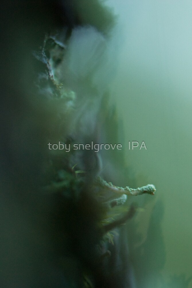 Forest Moss by toby snelgrove  IPA