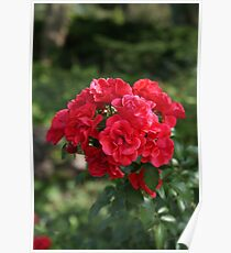 Nature's Bouquet Poster