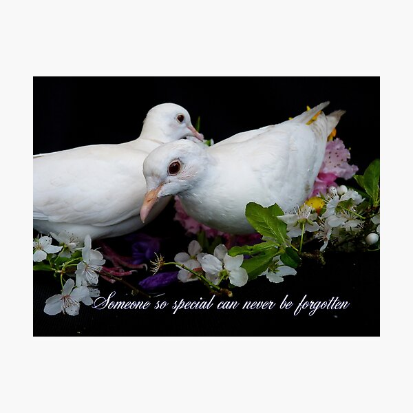 Someone So Special Can Never Be Forgotten - White Doves - NZ Photographic Print