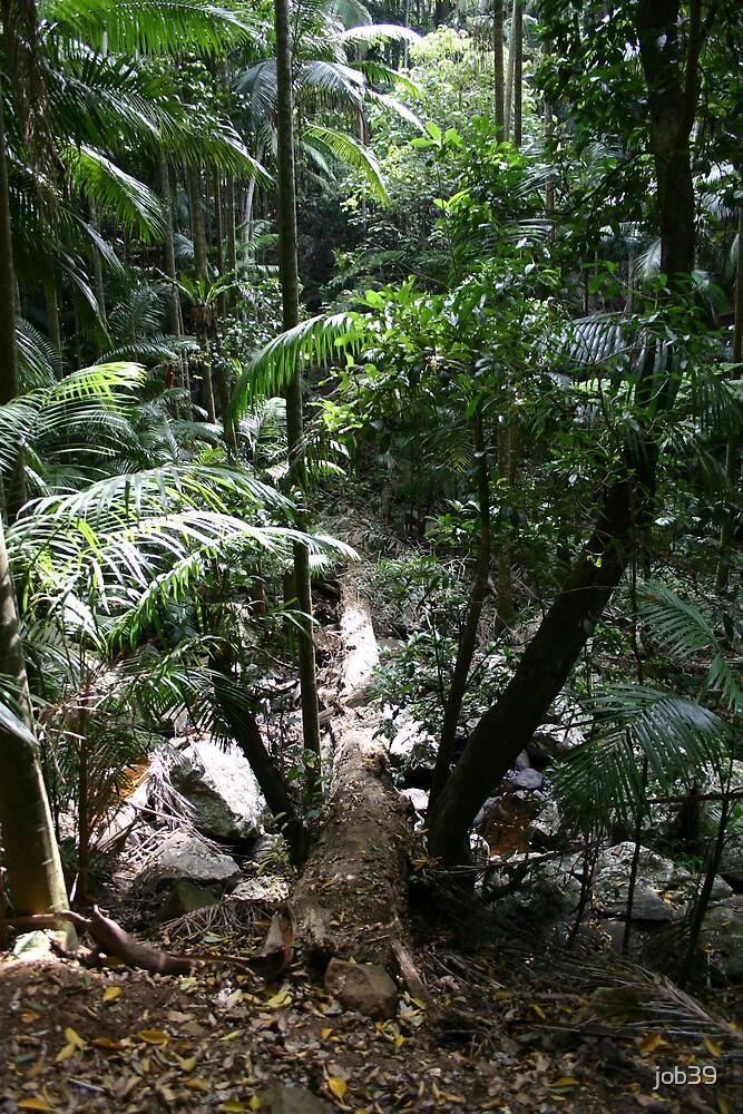 Rainforest Trail by job39