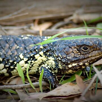 Lizard by risingstar