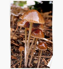 I Could Be A Death Cap! - Little Brown Mushrooms LBM - NZ Poster