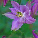 Purple Wings by Eileen McVey
