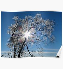 Fairy Dust - Tree Coated In Hoar Frost - Gore NZ Poster
