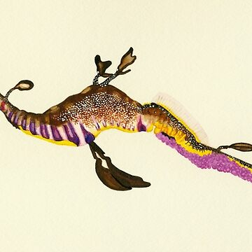 Weedy Sea Dragon Watercolour by neroli