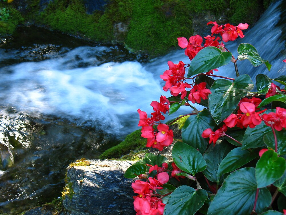 """""""waterfalls And Flowers"""" By 5hikers"""