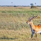 Lechwe Plains by Owed To Nature