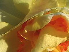 Folds by cnance