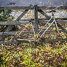 Bicycle of Old by Ricky Pfeiffer