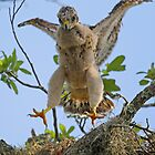 Look mom I can fly! by Anthony Goldman