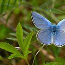 AM I BLUE? by clou2