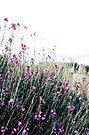 ...wallflowers... by Carol Knudsen
