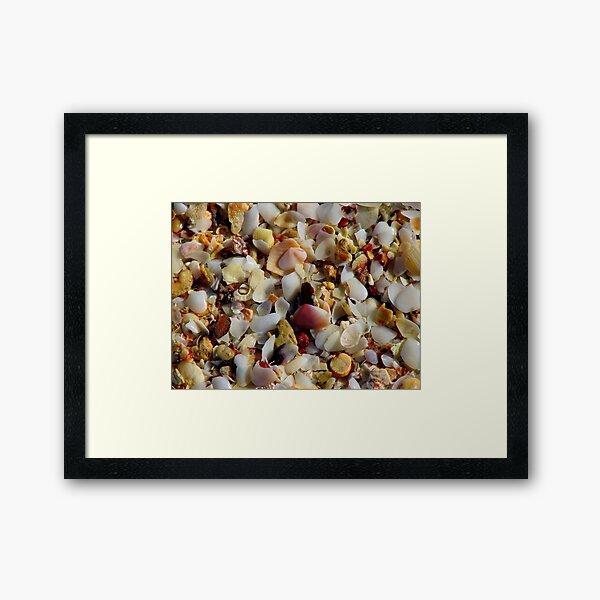 Shell Grit 2 Framed Art Print