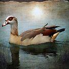 Moonlit Swim by Penny Odom