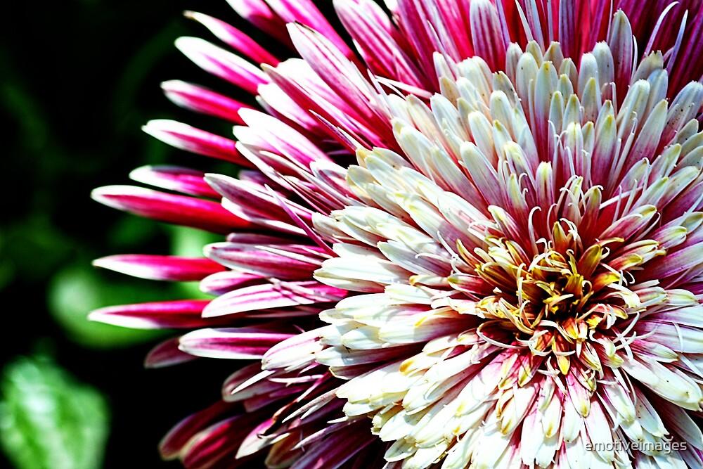 Pink Sun by emotiveimages