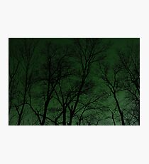 Nocturnal - Green Photographic Print