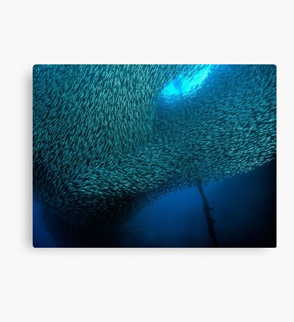 School of Sardines at Panagsama Beach Canvas Print