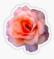 Simple Rose Sticker