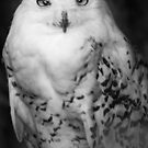 Snowy Owl by Moth