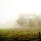 Morning mist by Anteia