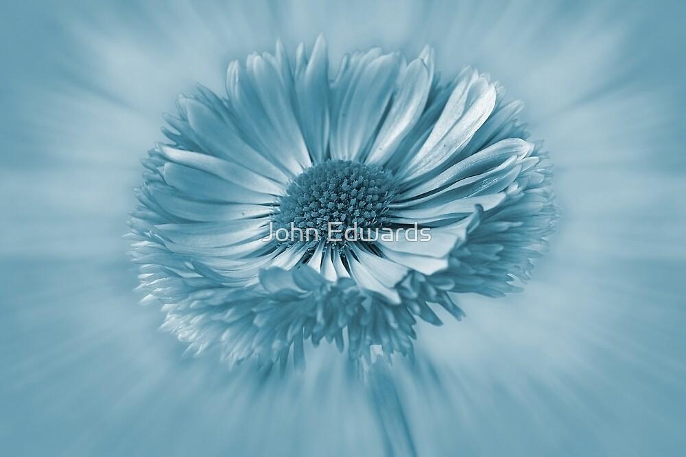 Blue Bellis by John Edwards