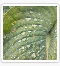 Green leaf Sticker