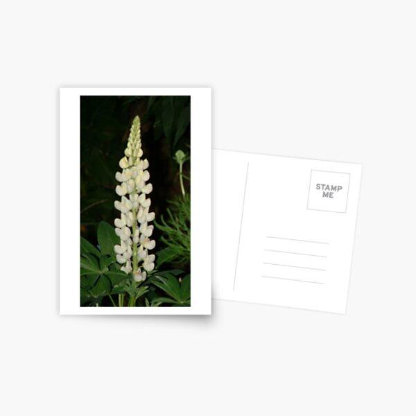 Lupin Postcard