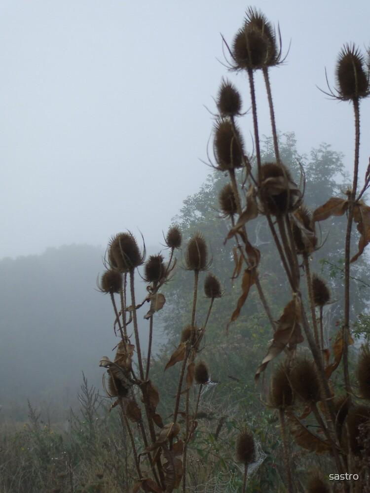 Mist by sastro