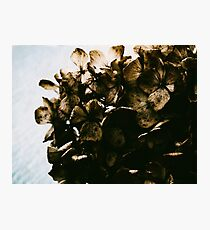 Dried Photographic Print