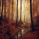 Forest creek at sunrise in fall by Dirk Wuestenhagen