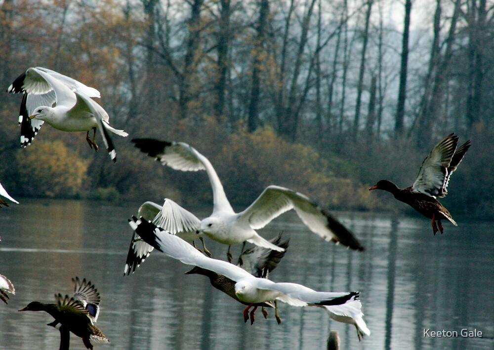 Bird take off by Keeton Gale