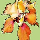 Peachy Hibiscus by DAdeSimone