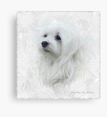 Snowdrop the Maltese Canvas Print