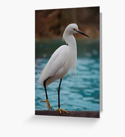 Egret Greeting Card