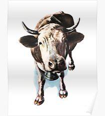 Farm Cow Poster