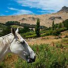 Horse Country by kaneko