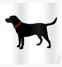 Labrador Retriever, Black Lab Poster