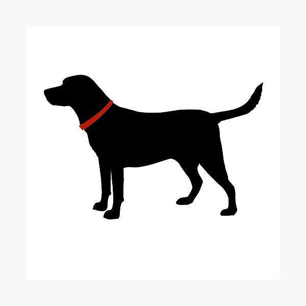 Labrador Retriever, Black Lab Photographic Print