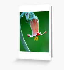 Colour magnified Greeting Card