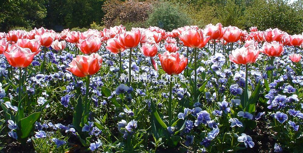 Field of Flowers by Mishka Gora
