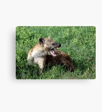 Spotted hyena growling  Canvas Print