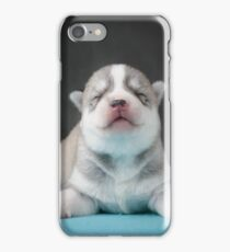 Cute huskie pup iPhone Case/Skin
