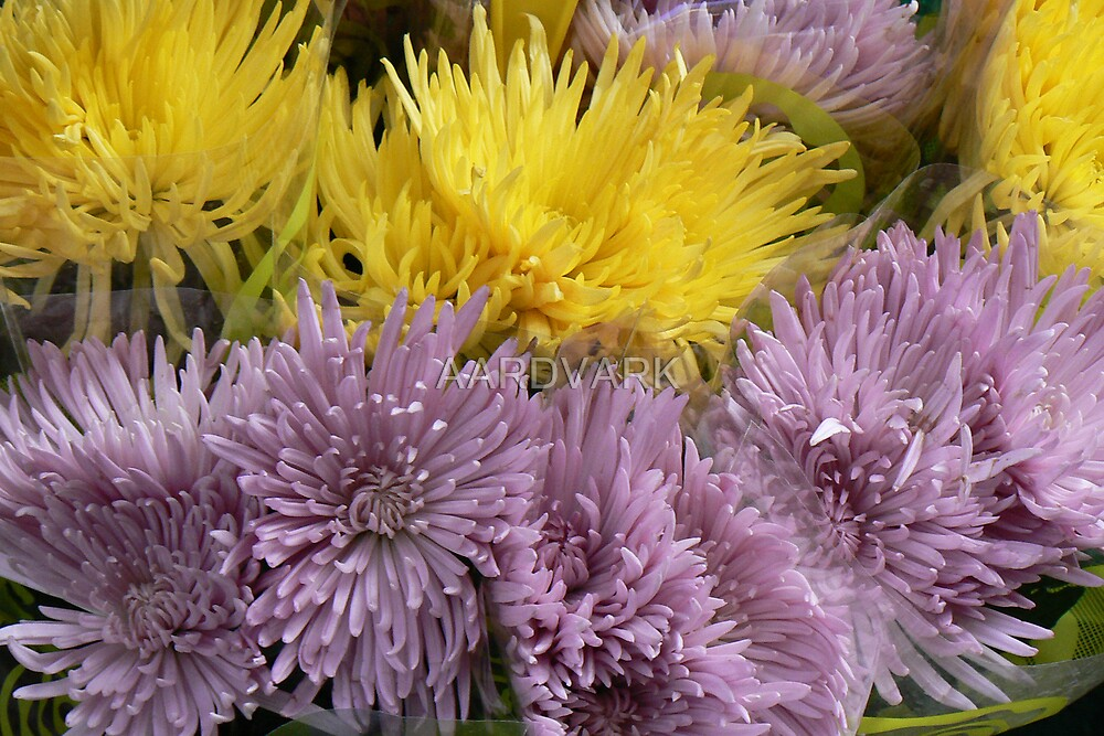 York Market - Colourful Blooms by AARDVARK
