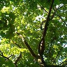 tree tops by cynthia harper